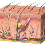 Skins Nutritional Needs